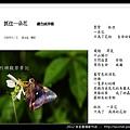 孫金星攝影作品_40.jpg