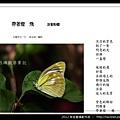 孫金星攝影作品_43.jpg