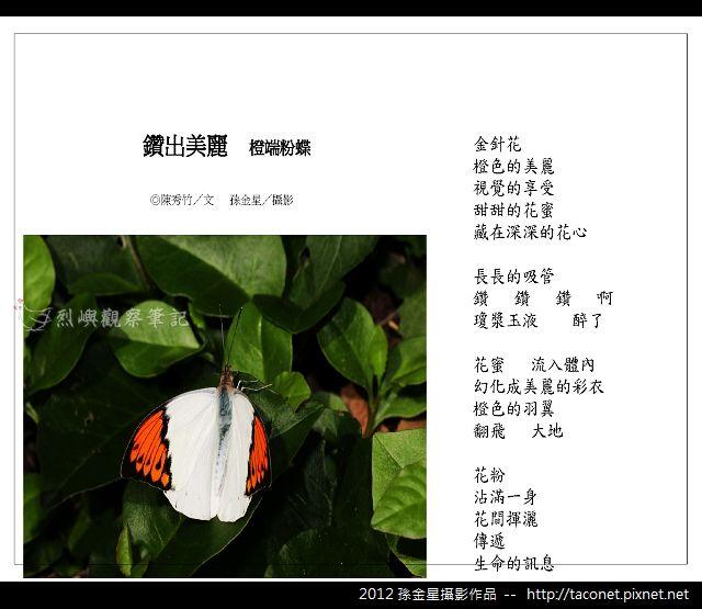 孫金星攝影作品_50.jpg