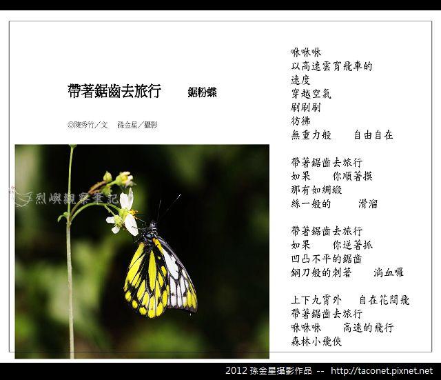 孫金星攝影作品_51.jpg