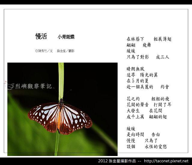孫金星攝影作品_53.jpg