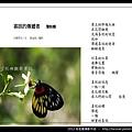 孫金星攝影作品_52.jpg