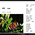 孫金星攝影作品_64.jpg