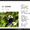 孫金星攝影作品_70.jpg
