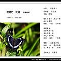 孫金星攝影作品_69.jpg