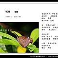 孫金星攝影作品_71.jpg