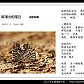 孫金星攝影作品_73.jpg