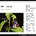 孫金星攝影作品_74.jpg