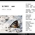 孫金星攝影作品_78.jpg