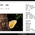 孫金星攝影作品_81.jpg