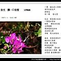 孫金星攝影作品_85.jpg
