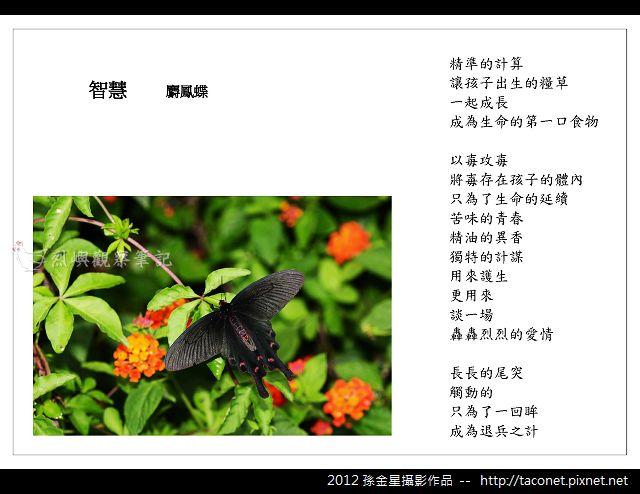 孫金星攝影作品_94.jpg