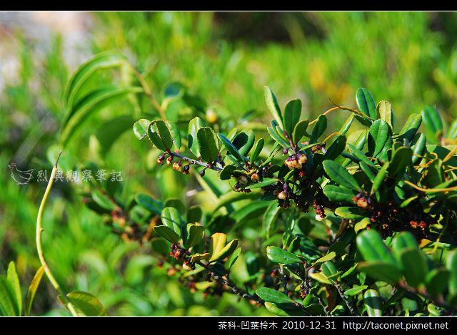 茶科-凹葉柃木_02.jpg