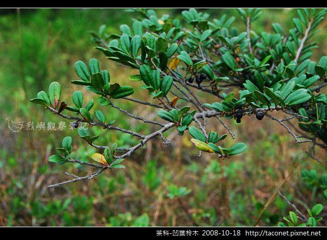茶科-凹葉柃木_04.jpg