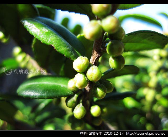 茶科-凹葉柃木_06.jpg