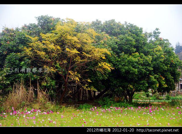 2012烈嶼花海_375.jpg