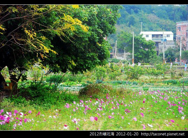 2012烈嶼花海_376.jpg