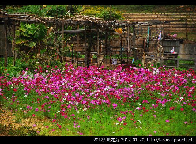 2012烈嶼花海_380.jpg