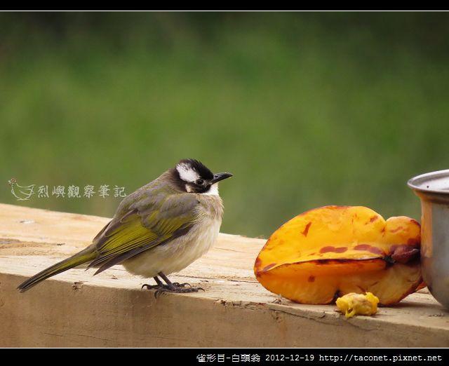雀形目-白頭翁_10