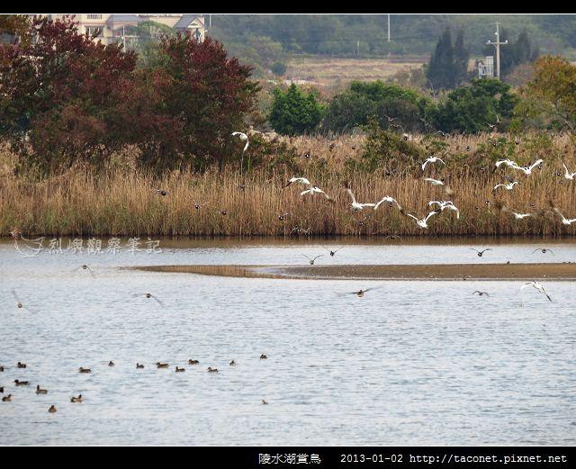 陵水湖賞鳥 _07