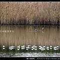 陵水湖賞鳥 _10