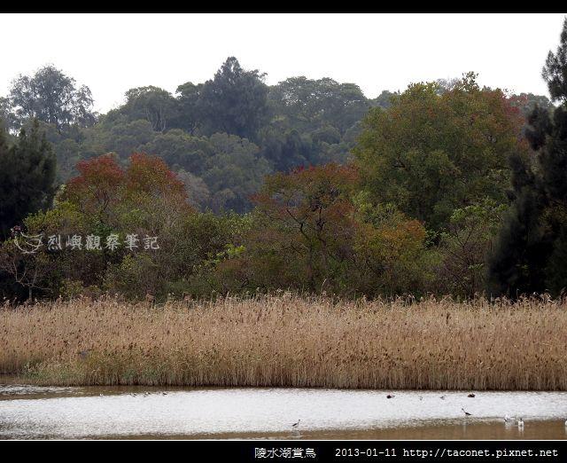 陵水湖賞鳥 _12