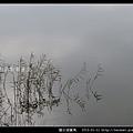 陵水湖賞鳥 _15