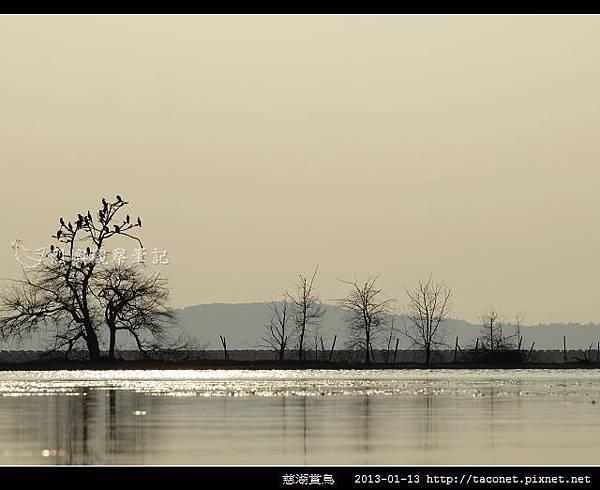 慈湖賞鳥_01