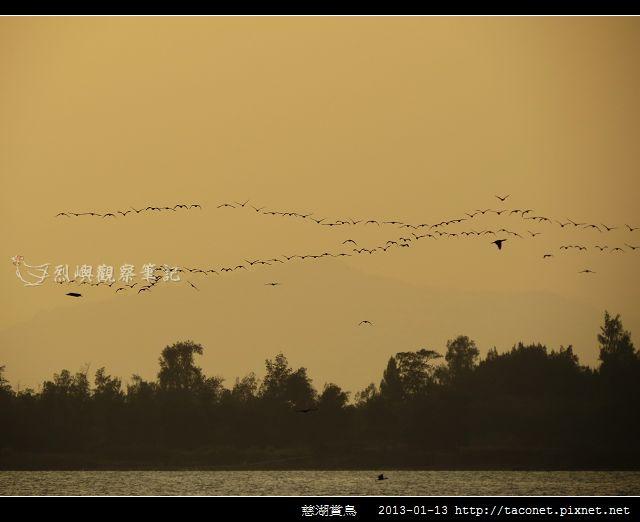 慈湖賞鳥_04