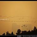 慈湖賞鳥_06