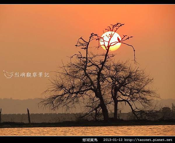 慈湖賞鳥_11