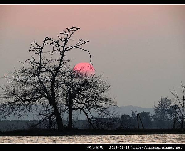 慈湖賞鳥_14