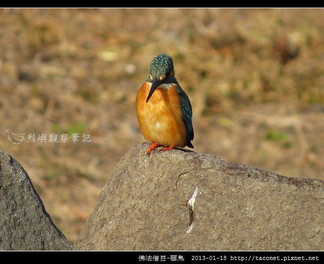 佛法僧目-翠鳥_14