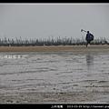 上林海灘_13