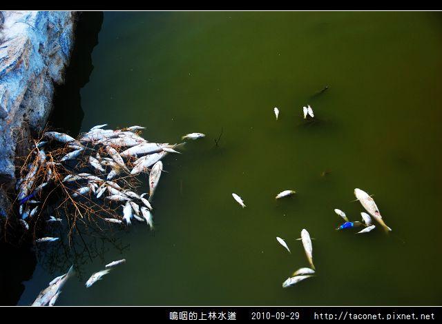上林水道之死_07.jpg