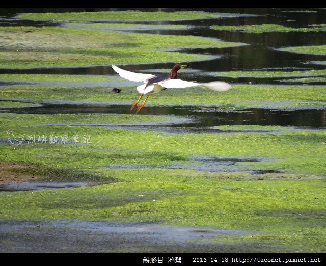池鷺_11