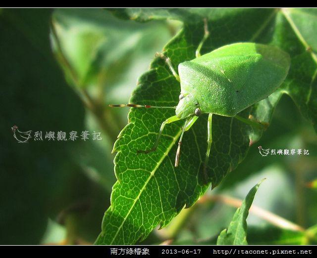 南方綠椿象.jpg