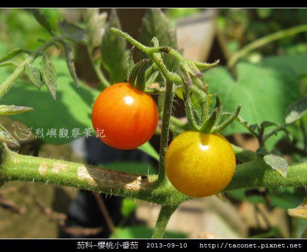 茄科-櫻桃小番茄_06.jpg