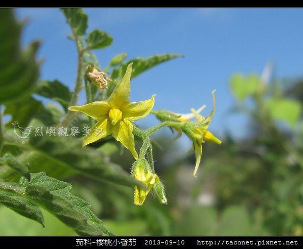 茄科-櫻桃小番茄_08.jpg