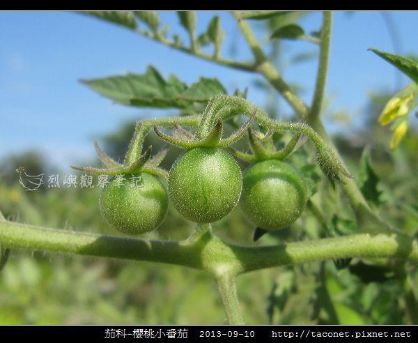 茄科-櫻桃小番茄_07.jpg