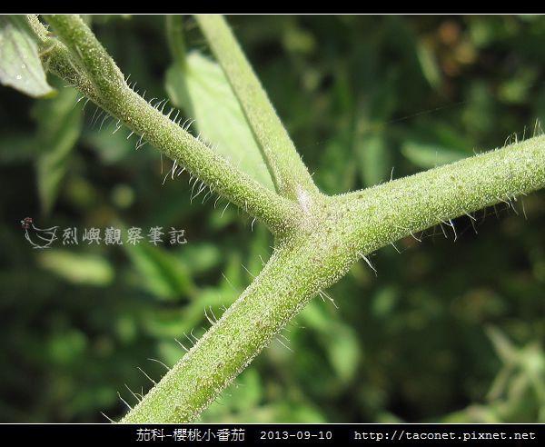 茄科-櫻桃小番茄_09.jpg