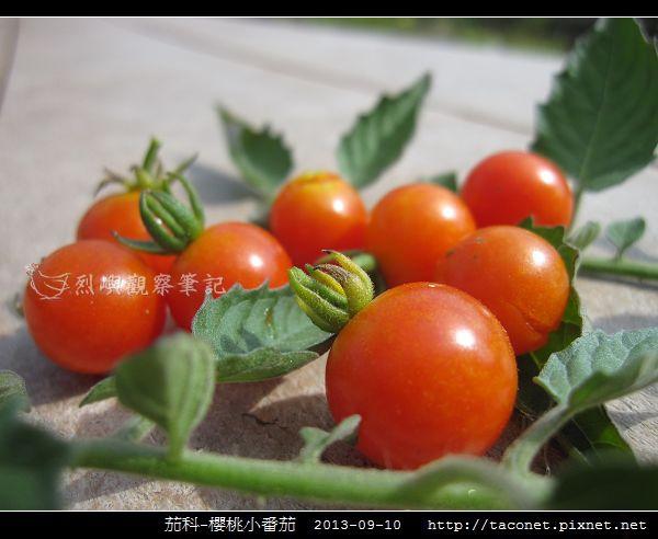 茄科-櫻桃小番茄_12.jpg