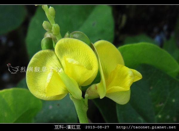 豆科-濱豇豆_10.jpg
