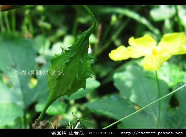 葫蘆科-山苦瓜_09.jpg
