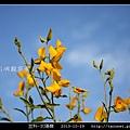 豆科-太陽麻_06.jpg