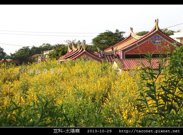 豆科-太陽麻_11.jpg
