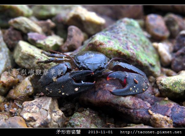 矛形岩瓷蟹_11.jpg