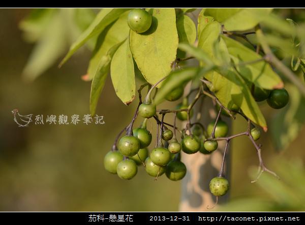 茄科-懸星花_08.jpg