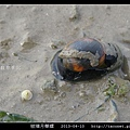 玻璃月華螺_05.jpg