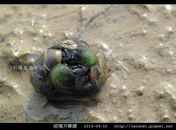 玻璃月華螺_09.jpg
